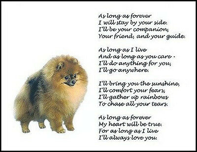 """Beautiful POMERANIAN print """"AS LONG AS FOREVER"""" photo poem picture sign dog NEW!"""