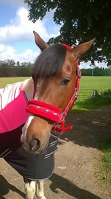 NEW Horse print fur padded headcollars halter + matching lead RED  COB