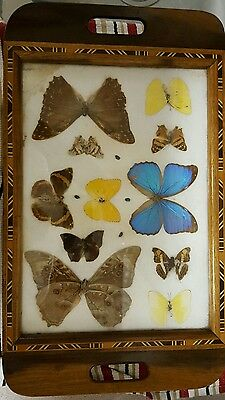 Wood Butterfly Tray