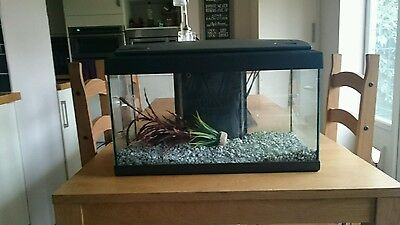 tropical fish tank complete