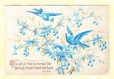 Victorian Religious Card, Birds And Nest