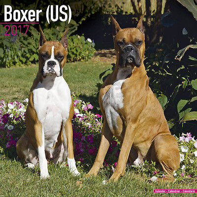 """Boxer 2017 Wall Calendar by Avonside (12"""" x 24"""" when opened)"""