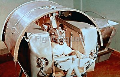Picture Photo Laika the first dog in space w capsule built around her 1581