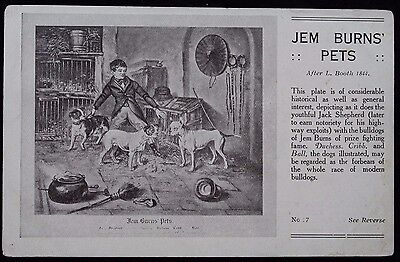 "Nice Vintage Advertising Postcard ""Jem Burns Pets"" With Bulldogs"