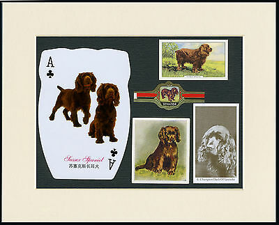 Sussex Spaniel Mounted Set Of Vintage Dog Collectable Cards And Bands