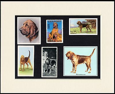 Bloodhound Mounted Set Of Vintage Dog Collectable Cards And Stamps