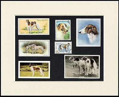 Borzoi Mounted Set Of Dog Collectable Cigarette Trade/breed Cards And Stamps