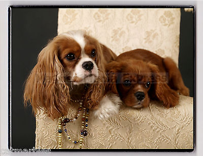 METAL MAGNET Image Of Cavalier King Charles Spaniel Pups Puppies Dogs MAGNET X