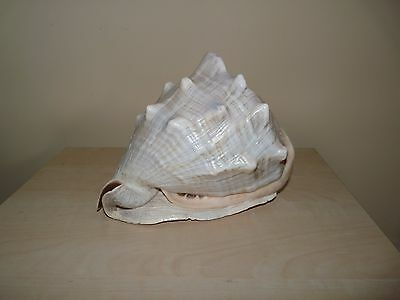 Large Vintage Conch Shell