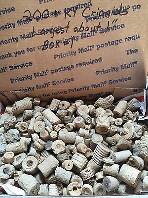 "KENTUCKY CRINOIDS - STEMS, FOSSILS & BEADS - 200 + !  LARGEST ABOUT 1"" Box #1"