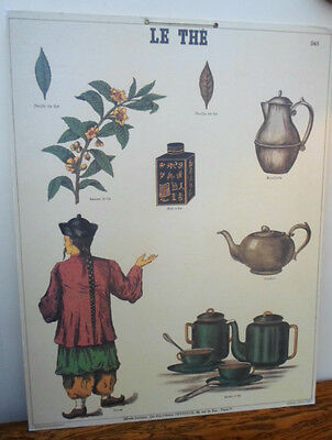 French 1970s reproduction school poster Emile Deyrolle, Le The, Tea