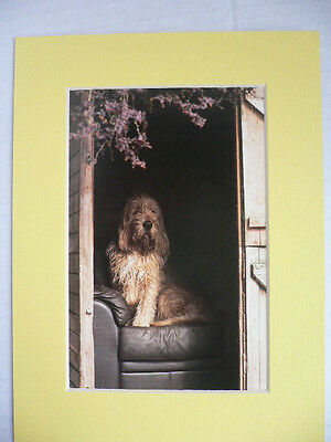 OTTERHOUND DOG POSTCARD picture mounted print dog Unique dog lover gift present