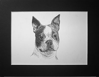 1935 BOSTON TERRIER DOG Vintage  mounted Wardle bookplate PRINT Christmas gift