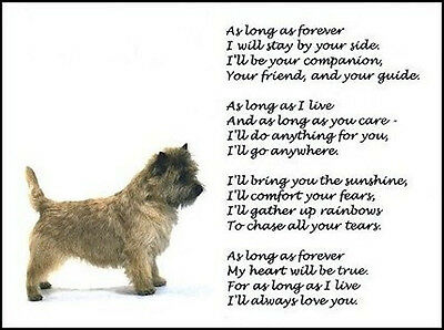 """Beautiful CAIRN TERRIER print """"AS LONG AS FOREVER"""" photo picture verse poem NEW!"""
