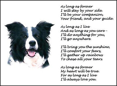 """Beautiful BORDER COLLIE print """"AS LONG AS FOREVER"""" art poem dog photo verse NEW!"""