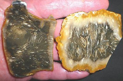 2 Exotic Rare Indonesian Fossil Foraminifera  Feather Agate Rough Cut Slabettes