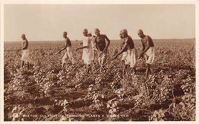 SUDAN ~ WORKERS THINNING 6 WEEK OLD COTTON PLANTS, REAL PHOTO PC ~ c. 1930's