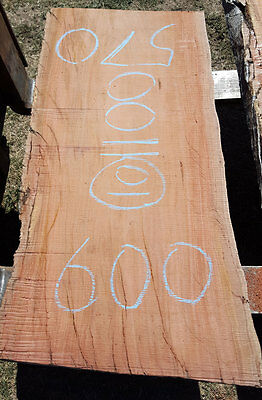Red Gum timber slab #135 for bench bar top wood furniture 1100 x 570 to 600