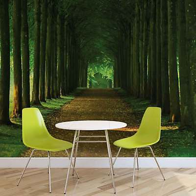WALL MURAL PHOTO WALLPAPER XXL Path Trees Forest Nature (2285WS)