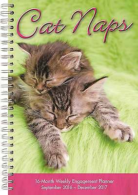 Cat Naps A5 Diary -2016-2017 Cats General Diaries Weekly Kittens New