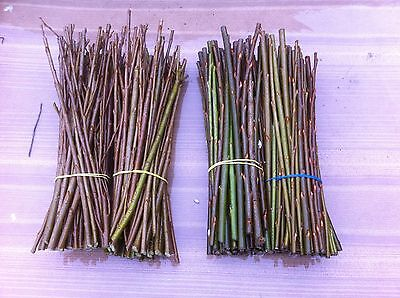 100 Super Willow cuttings in 2 varieties for Log/Woodfuel Production