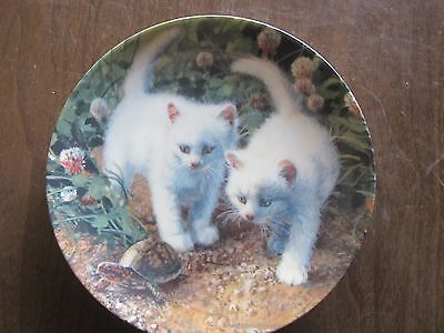Knowles A CHANCE MEETING White American Shorthairs Collectors Plate (KJ)