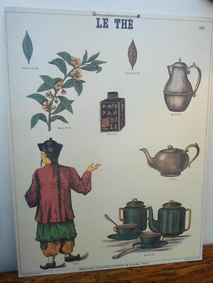 French vintage school poster, 1970s reproduction  Emile Deyrolle, Le The, Tea