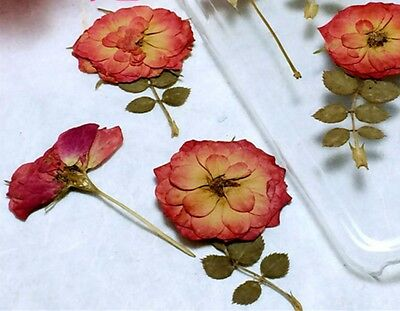 12 xPressed Dried Red Rosa Flower with Leaf DIY Phone Case bookmark Saucer Cup 6