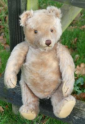 Large Very Old Steiff Bear With Character Adorable Old Boy, 1950's