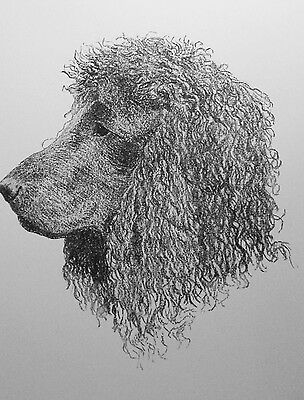 1935 IRISH WATER SPANIEL Vintagel mounted Wardle bookplate Christmas gift print