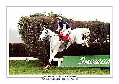 Desert Orchid Richard Dunwoody 1981 Sandown Steeple Chase Horse Racing A4 Photo