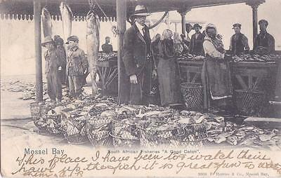 Pc Mossel Bay South African Fish Market Africa Ethnic  Posted 1906