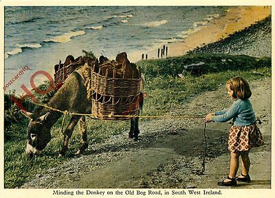 Postcard: South West Ireland, Minding The Donkey On The Old Bog Road