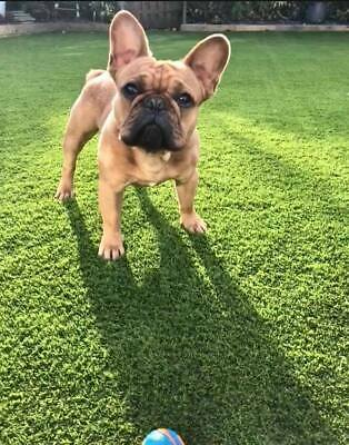 Premium quality artificial grass - 30mm pile - best for dogs !!