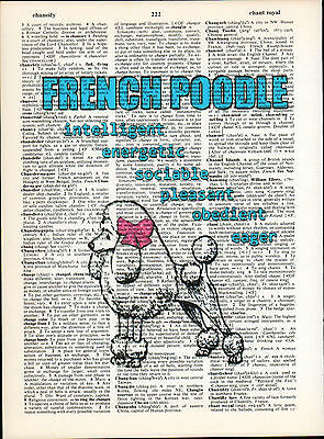 French Poodle Dog Traits Altered Art Print Upcycled Vintage Dictionary Page