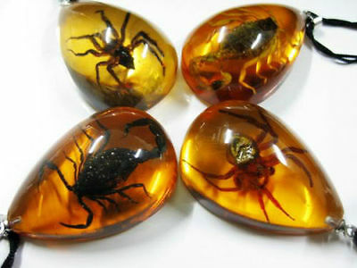 Yellow Amber Real insect mix Spider Scorpion Pendant&Necklace.