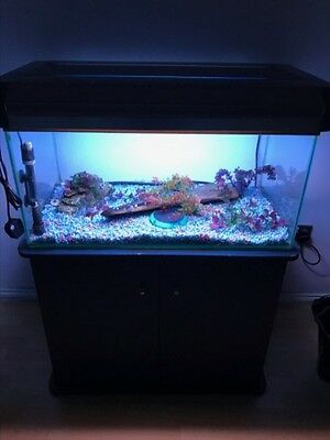 3ft fish tank with cabinet and all accessories