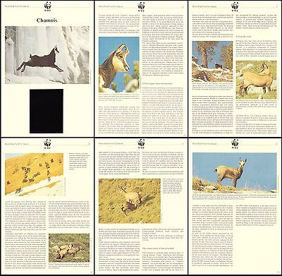 Albania WWF Chamois Info pages