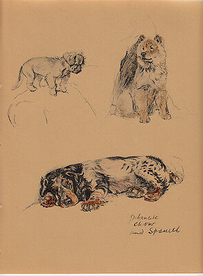 c. aldin original 1935 illustration of a pekinese -chow- and spaniel