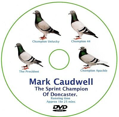 Racing Pigeon Dvd On Mark Caudwell The Rpra Sprint Champion Of Doncaster
