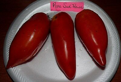 Opalka Tomato Seeds- The best sauce & paste tomato!- Comb. S/H See our store!