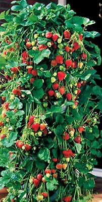 15 Hanging Flower Strawberry Planter Hanging  Flower Plant bags  Trailing Plants