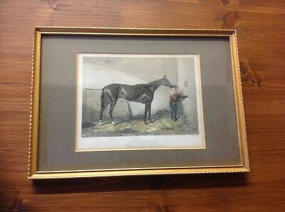 """FRAMED HORSE ENGRAVING of """" MINCEMEAT"""""""