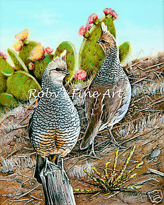 """Scaled Quail Art Print """"Cottontops"""" 5x7 Giclee by Realism Artist Roby Baer PSA"""