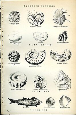 Mesozoic Fossils 1885 Antique Original Print from Engraving Paleontology Jurassi