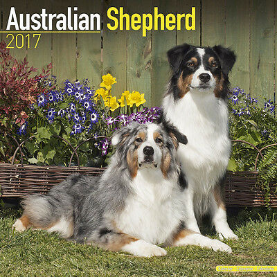 "Australian Shepherd 2017 Wall Calendar by Avonside (12"" x 24"" when opened)"