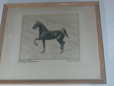 1950's Pencil Drawing of Prancing Horse 'Daisy Shannon' by June Cervin