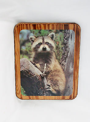 "Raccoon in a Tree Wood Wall Hanging Plaque-11.5 X 9.5"" Vintage"