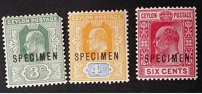 1903 Ceylon (Sri Lanka) lot of 3 Edward VII SPECIMEN stamps Mint - 858