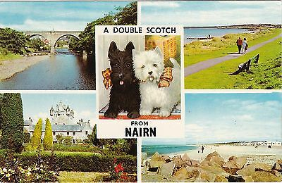 Double Scotch / Scotty Dog Multiview, NAIRN, Nairnshire